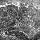 canp-de-mar-gardens-engraving