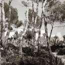 canp-de-mar-gardens5